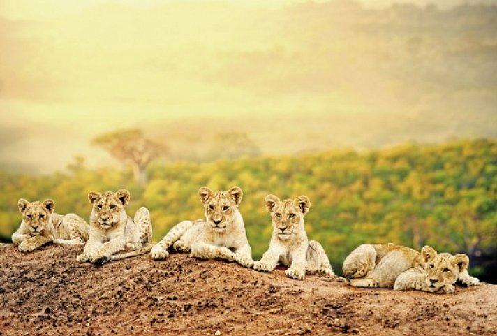 Geschwindigkeit aus Südafrika johannesburg