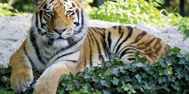 Tierpark Hellabrunn & A&O München Laim
