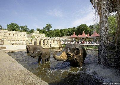 Erlebnis-Zoo Hannover & Star Inn Hotel Premium Hannover